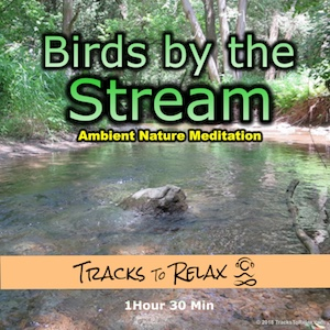 Birds by the stream ambient meditation